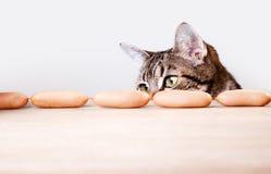 Cat and Sausages Stock Photos
