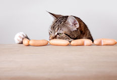 Cat and Sausages Royalty Free Stock Photography