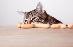 Cat and Sausages Stock Photos