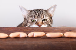 Cat and Sausages Royalty Free Stock Photos