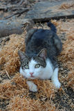 Cat in sawdust Royalty Free Stock Image