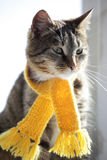 Cat with scarf Royalty Free Stock Photography