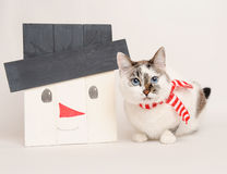 Cat in scarf with wooden snowman. Cat in striped scarf with handmade snowman Royalty Free Stock Photo