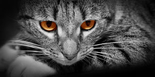 Cat with scary red glowing eyes. Cat with mysterious scary red glowing eyes. Conceptual Stock Photography