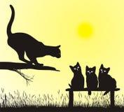 Cat school. School jumping cat, vector illustration Stock Images