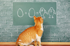 Cat school Royalty Free Stock Image