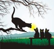 Cat school jumping. School jumping cat, vector illustration Royalty Free Stock Photo