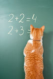 Cat school. The red cat solving examples on mathematics Stock Photos