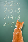 Cat school. The red cat solving examples on mathematics Stock Photo