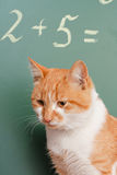 Cat school Stock Photos
