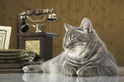Cat scientific with books on the table Royalty Free Stock Image