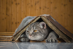 Cat scientific with books on the table Royalty Free Stock Photo