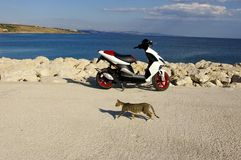 Cat and scooter. Cat passing by scooter standing on stone pier with sea shore visible stock image