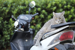 Cat on a scooter. Close up of a cat on a scooter stock images