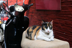 Cat and scooter Stock Images