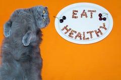 Cat Scottish Fold et le plat avec des mots mangent sain fait de noyaux de cerise Photo stock