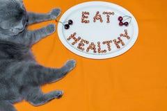 Cat Scottish Fold et le plat avec des mots mangent sain fait en cherr Image stock
