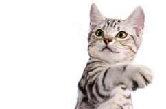 Cat scratch. Isolate cat scratch on white background Royalty Free Stock Photo