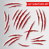 Cat scratches transparent Royalty Free Stock Images