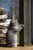 Cat  scratching the column Royalty Free Stock Images