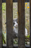 Cat scratching fence Stock Photos