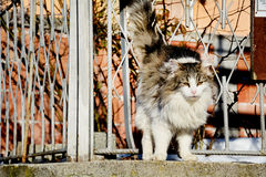 Cat scratching in fence. White cat  rubbed against a  fence Stock Photography