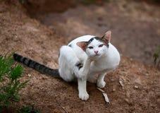 The beautiful cat Royalty Free Stock Photos