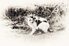 Cat scratching itself fleas Royalty Free Stock Photos
