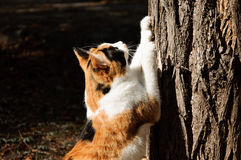Cat scrathing tree Stock Images