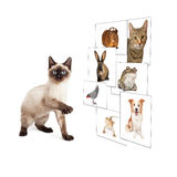 Cat Scrolling Pet Photo Wall Stock Image