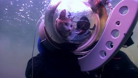 Cat scuba diver on background of reflection sunlight underwater. First and only in world pet animal in aqualung explores wild marine nature. Amazing unique stock footage