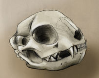 Cat scull Royalty Free Stock Image