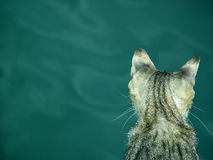 Cat on sea. A cat looking for a fish royalty free stock photos