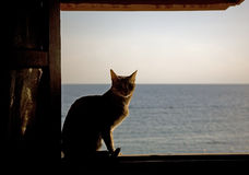 The cat and the sea Royalty Free Stock Images