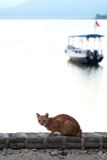 Cat at the sea with boat Royalty Free Stock Images