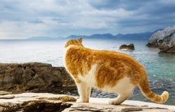 Cat on the sea. Cat on sea coast royalty free stock photo