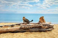Cat at the seashore. Cat sitting on a snag at the seashore royalty free stock photo