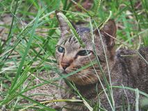 Cat see something. In the grass closeup on green leaf background stock photography
