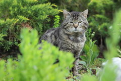 Cat in seedbed Royalty Free Stock Images