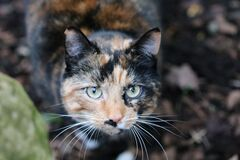 Cat in Selective Focus Photography during Daytime Royalty Free Stock Image