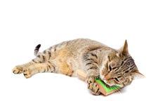 Cat Self Grooming Stock Photos