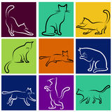 Cat series Royalty Free Stock Photos