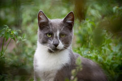 A cat with a serious look Stock Photo