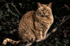 Cat. Serious cat in the park Royalty Free Stock Images