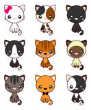 Cat Set, with black cat, white cat, grey cat, grey and white cat, brown and black act, brown cat Royalty Free Stock Photos