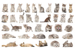 Cat set Royalty Free Stock Photography