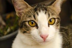 Poppy cat , small tiger stock photos