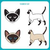 Cat Set siamese Fronte e corpo Vettore su un fondo bianco Cat Vector Illustration siamese Fotografie Stock Libere da Diritti