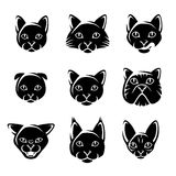 Cat set. Vector Royalty Free Stock Photography