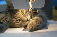 Cat with sewing machine Stock Photo